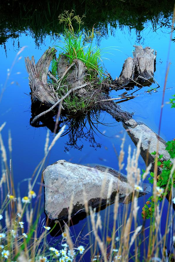 Rock And Stump Reflections by Jerry Sodorff