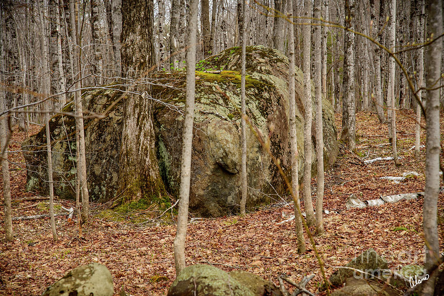 Rock Covered In Moss Photograph