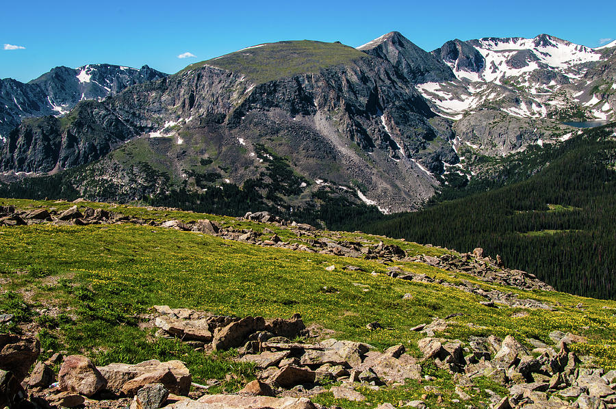 Rock Cut- Trail Ridge Road by Tom Potter