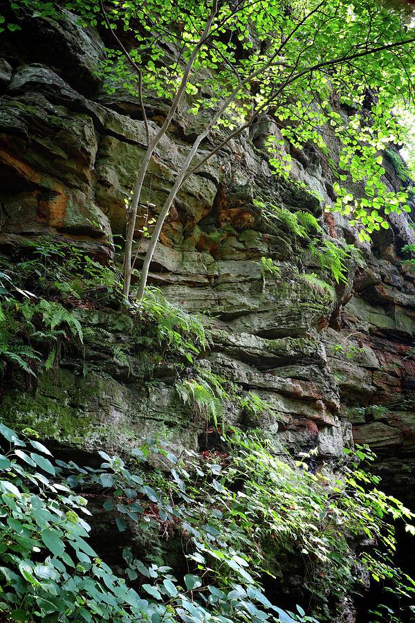Rock Garden Photograph