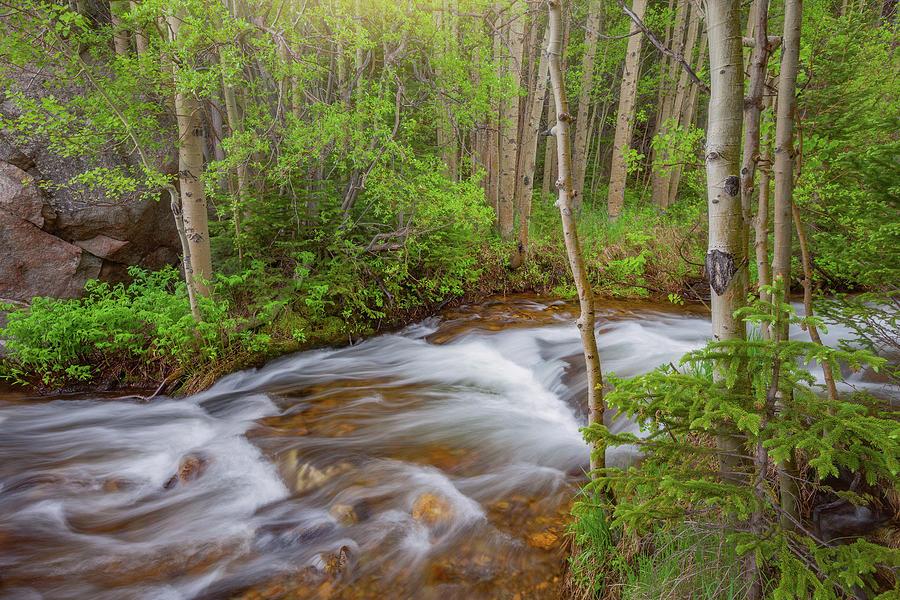 Rocky Mountain Stream Photograph