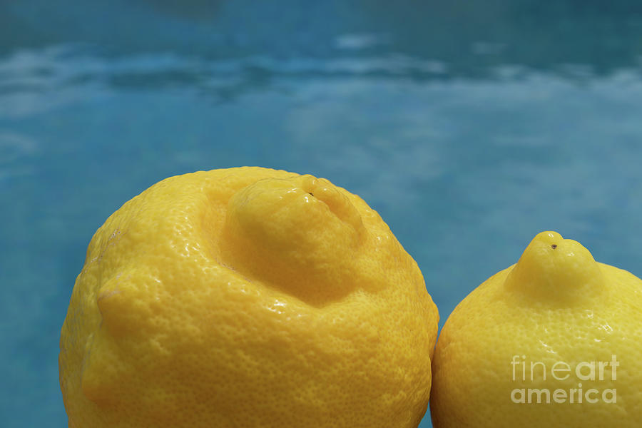 Sunny Yellow Lemons By The Pool Photograph