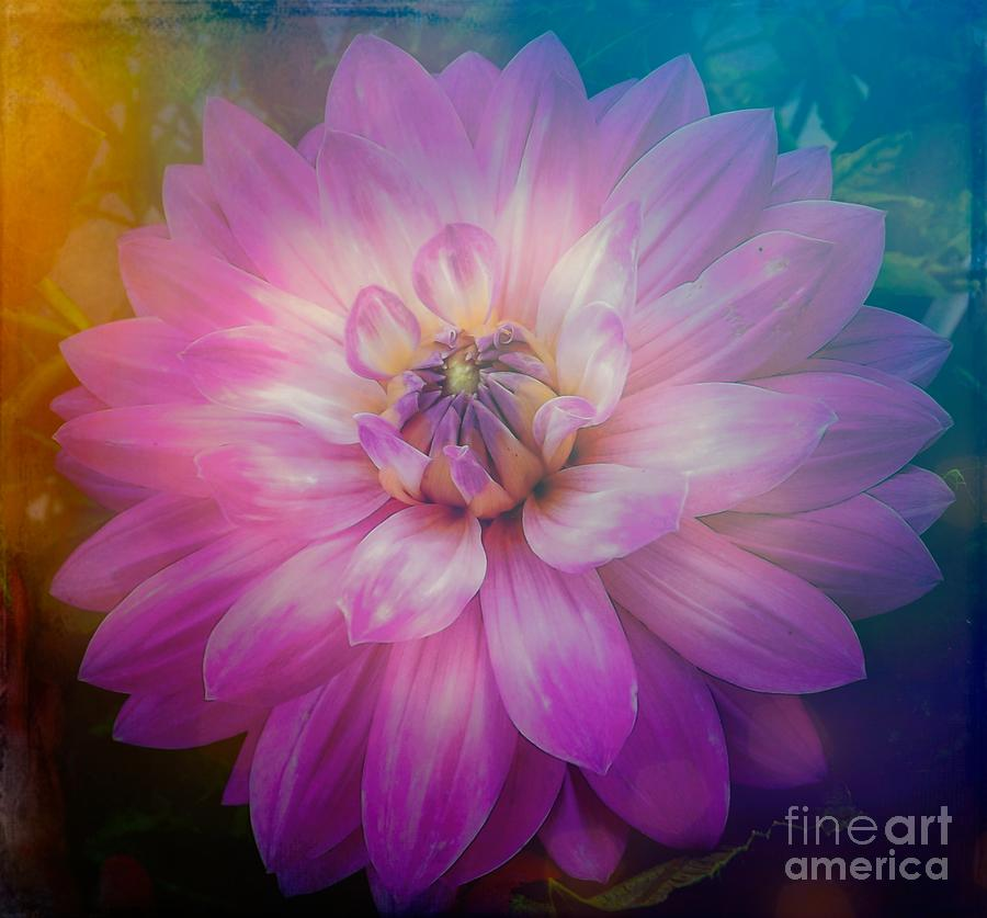 Romantic Pink Dahlia Flower with a Dreamy Day Effect by Rose Santuci-Sofranko