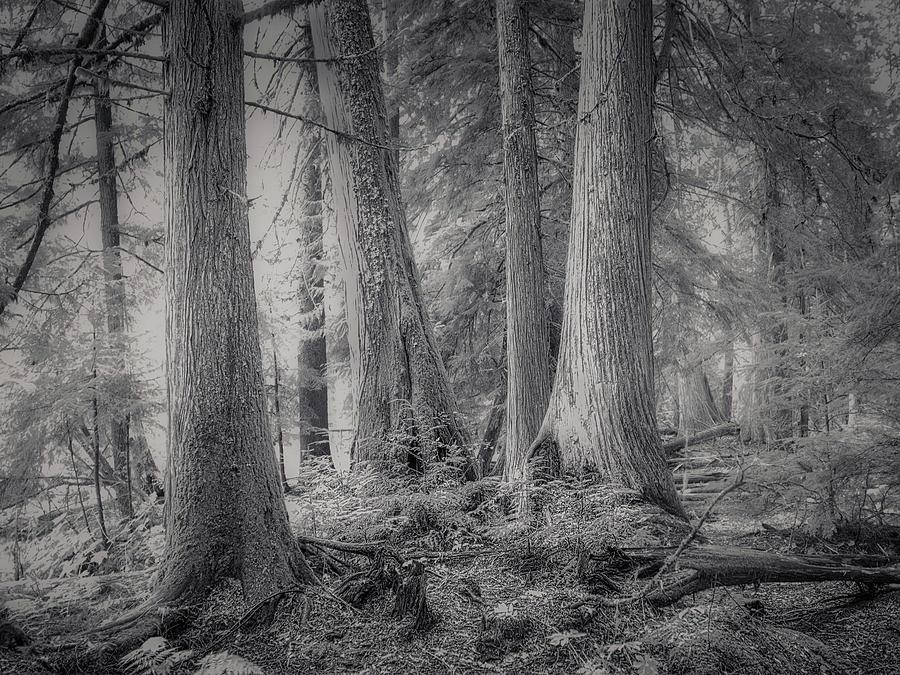 Roosevelt Grove Photograph