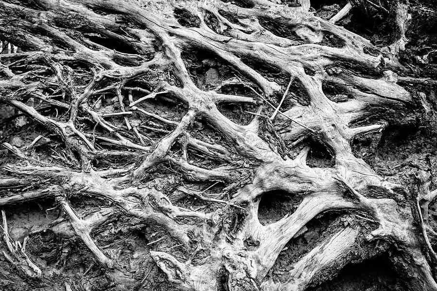 Rooted Photograph
