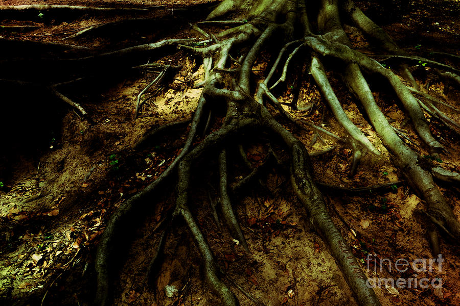 Roots Of Darkness Photograph