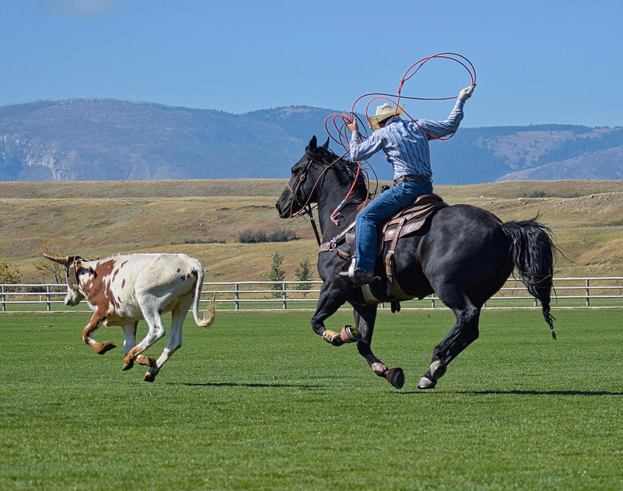 Cowboy Photograph - Roped by Cindy Keen