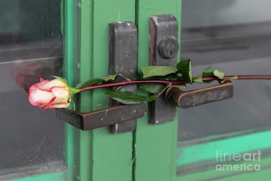 Rose Photograph