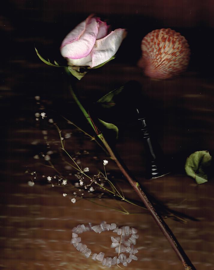 Rose Shell Scan Digital Art