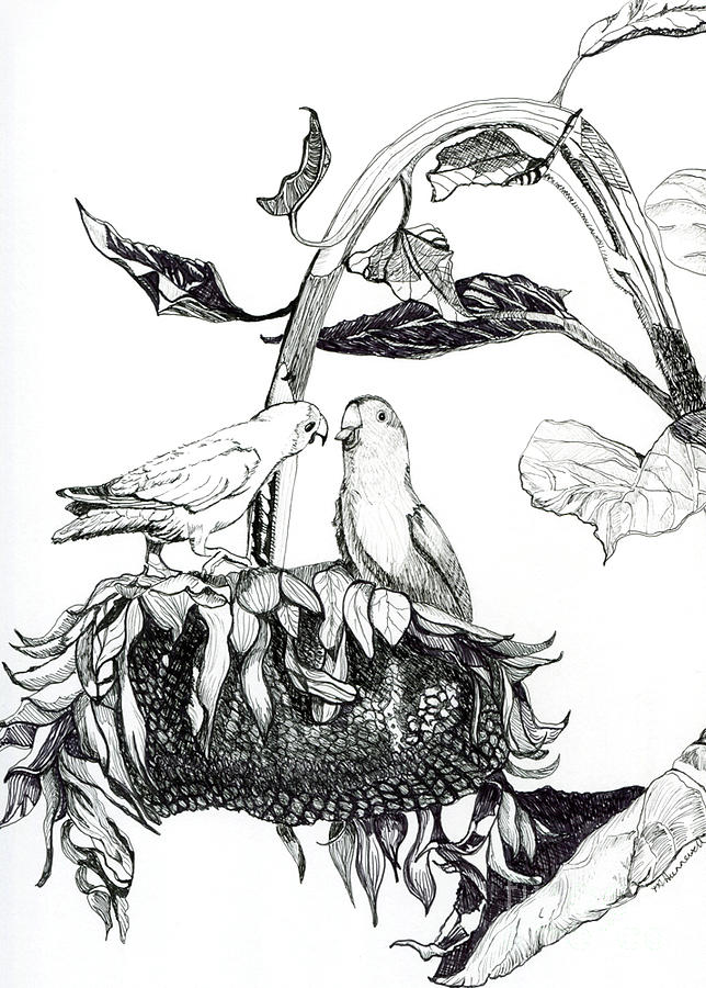 Rosy Faced Loverbirds Drawing