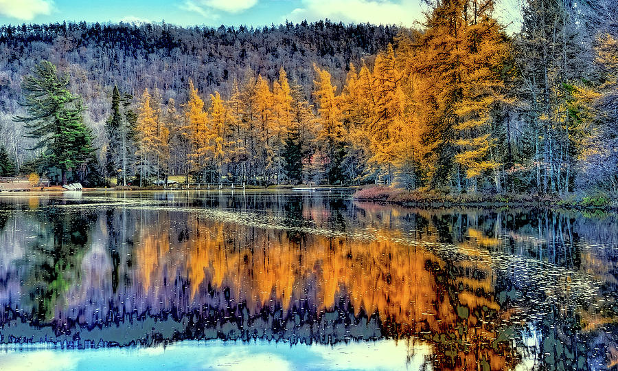Row of Tamaracks by David Patterson
