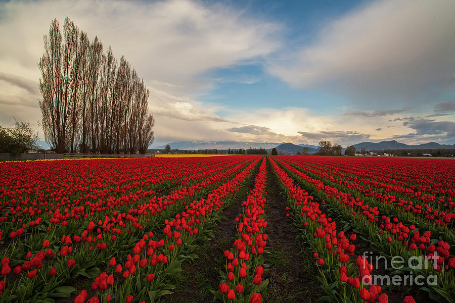 Rows Of Red Photograph