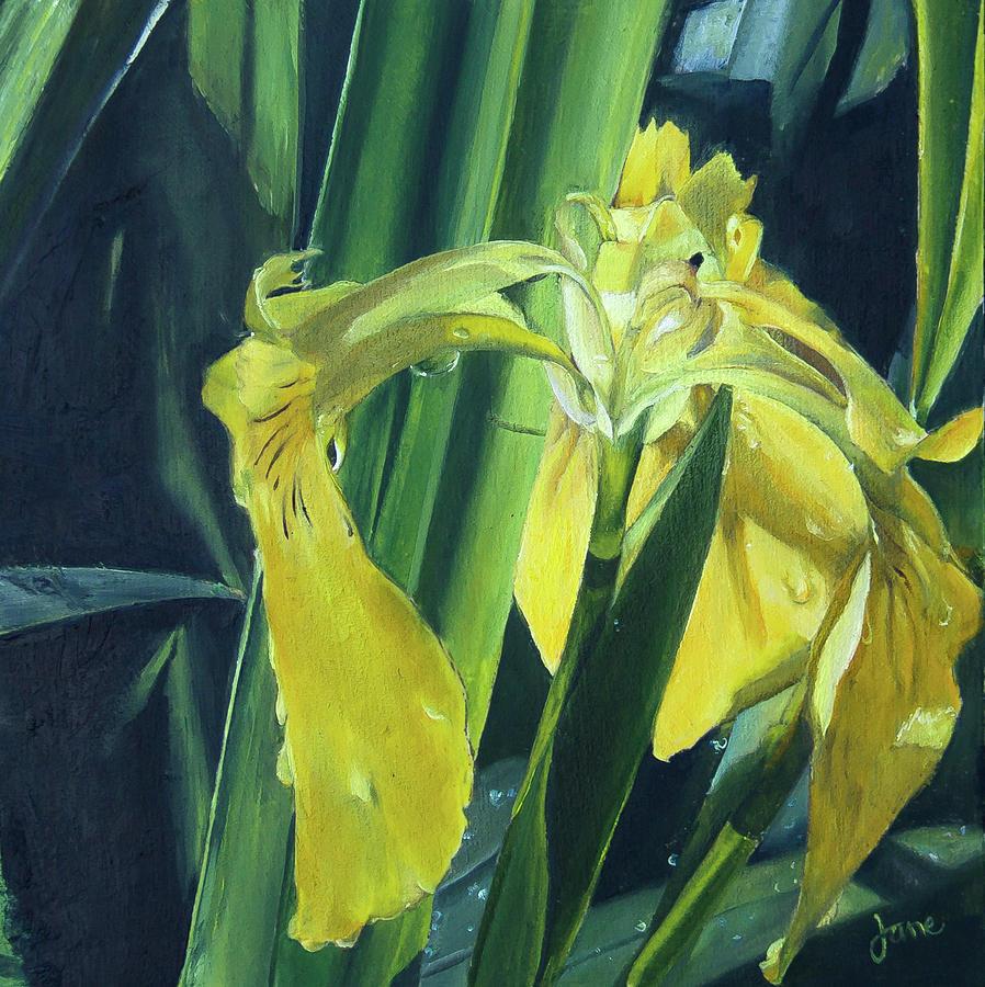 Royal Yellow Dutch Iris by Nila Jane Autry
