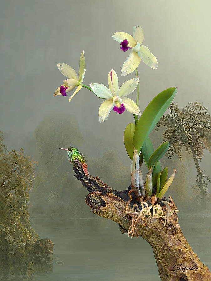 Rufous-tailed Hummingbird and Orchid by Spadecaller