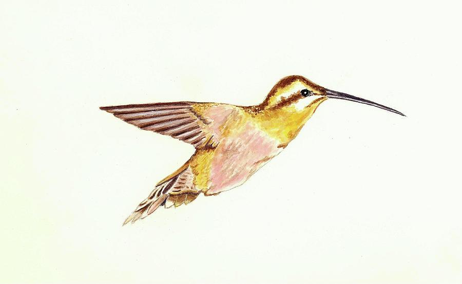 Bird Painting - Rufous Hummingbird by Michael Vigliotti