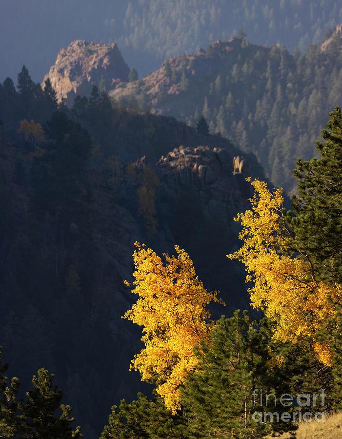 Rugged Autumn Gold Above Treeline Photograph