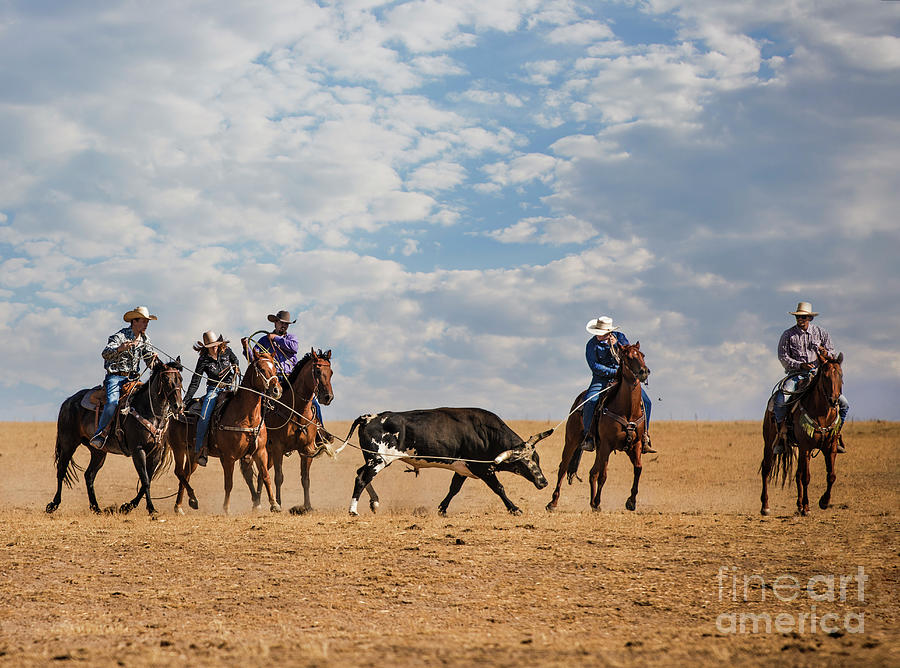 Runaway Bull by Diane Diederich