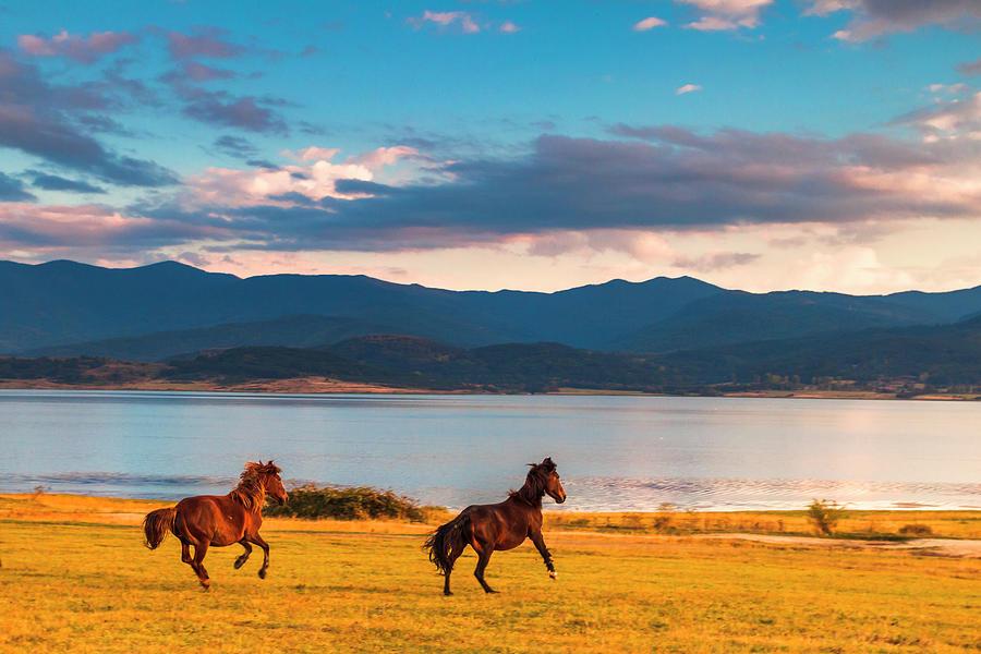Running Horses Photograph