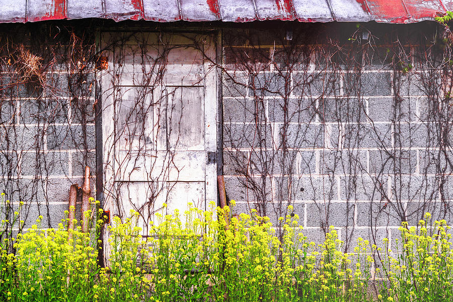 Rust, Vines And Mustard Photograph