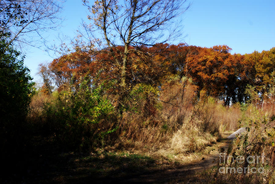 Nature Photograph - Rustic Autumn - Painterly by Frank J Casella