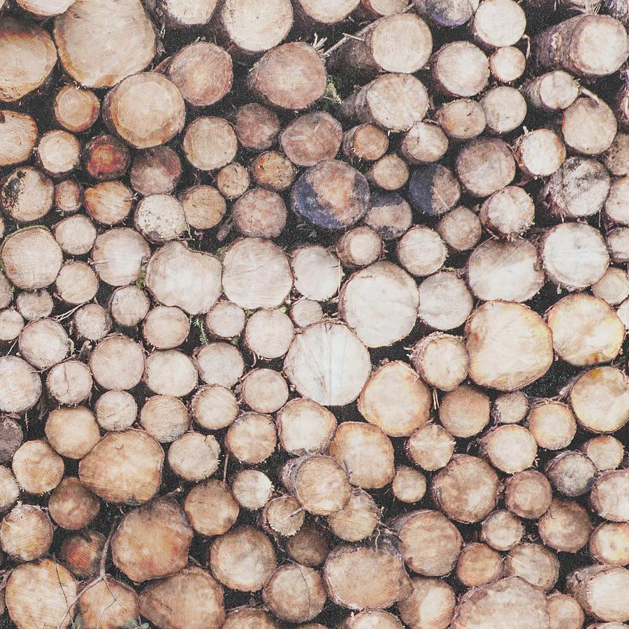 Logs Photograph - Rustic Wood Log Pile Circles by Kate Morton