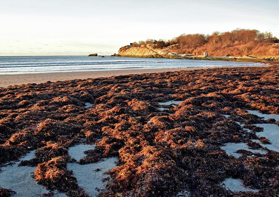 Sachuest Seaweed by NANCY DE FLON