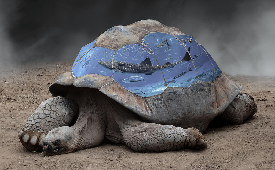 Tortoise Digital Art - Safe and Protected by Barroa Artworks