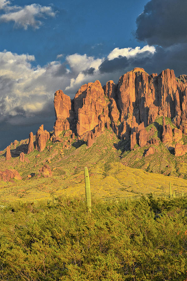 Saguaro Cactus And Superstition Mountains Photograph