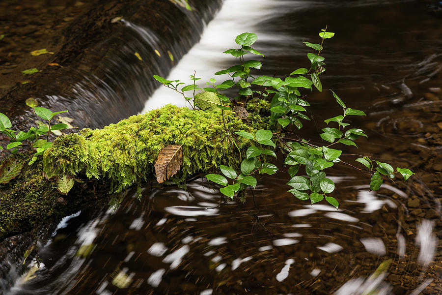 Salal and Moss by Robert Potts