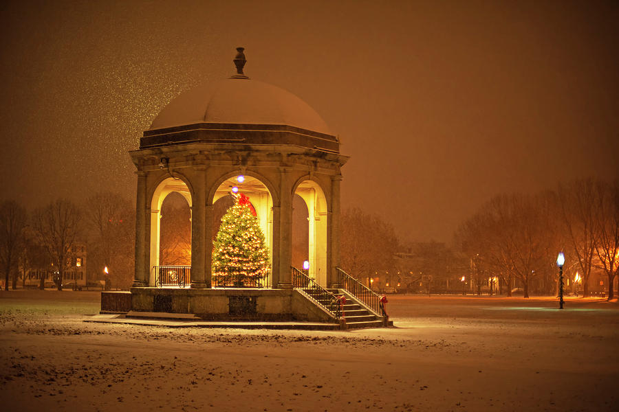 Salem Common Bandstand Christmas Tree in Snow by Toby McGuire