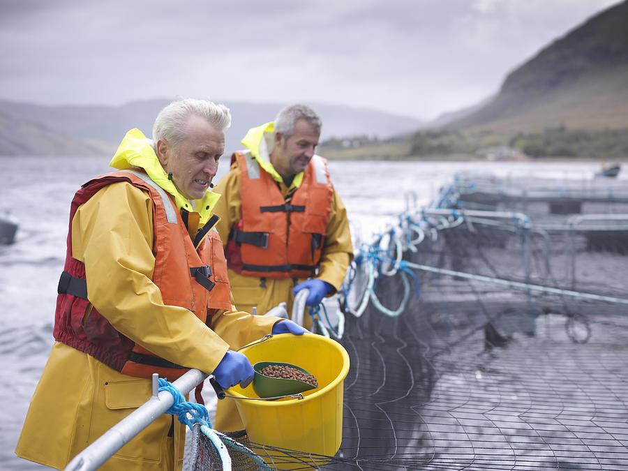 Salmon farmers feeding fish on pontoon of Scottish salmon farm over sea loch Photograph by Monty Rakusen