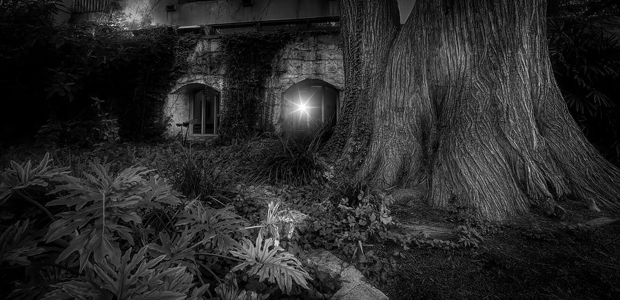 San Antonio Riverwalk Tree And Windows Black And White Photograph