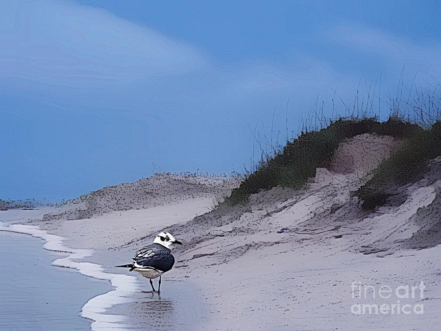 san padre sea gull by John Kolenberg