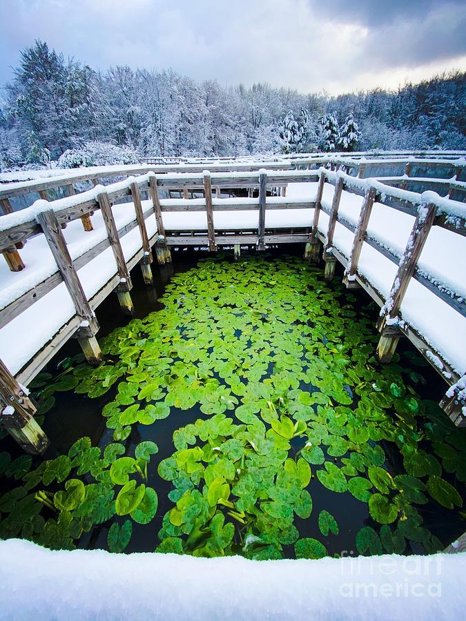 Sanctuary Marsh Winter Photograph