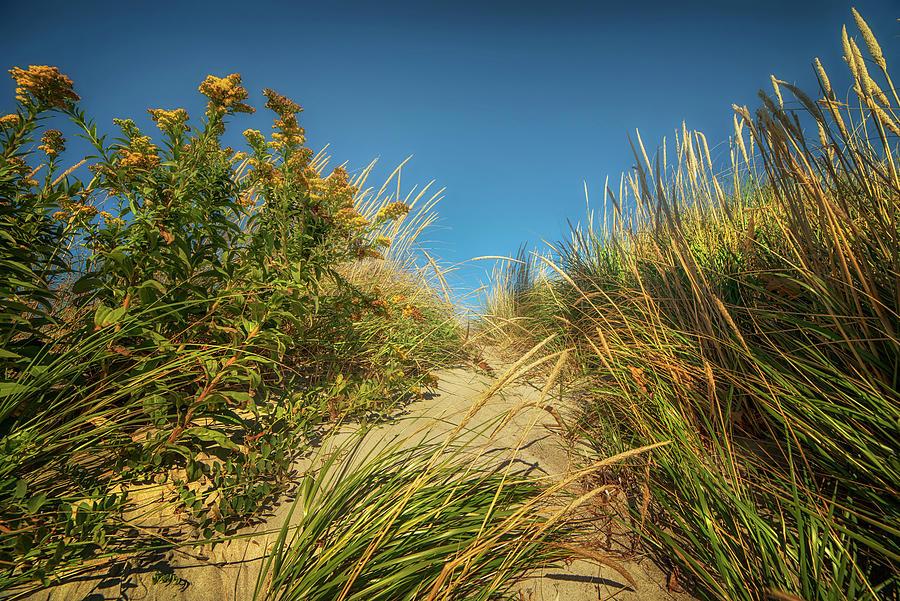 Sand Dunes And Beach Weeds Photograph