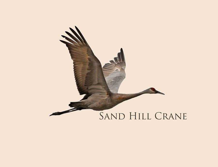 Sand Hill Crane in Flight by Whispering Peaks Photography