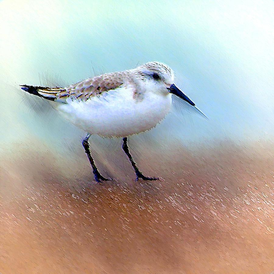 Sand Piper by David Manlove