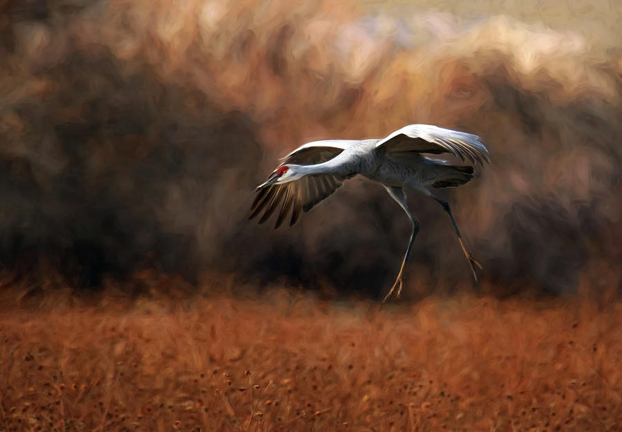 Sandhill Crane Landing by Art Cole