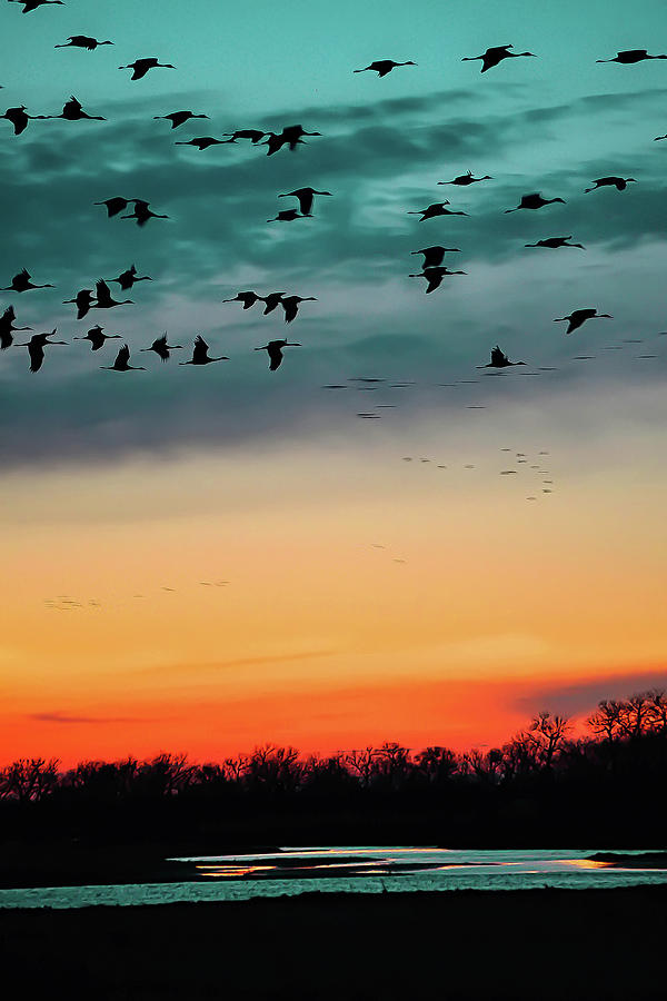 Birds Photograph - Sandhill Cranes by Emily Kent