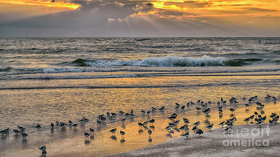 Sandpipers Enjoying Lido Beach Photograph