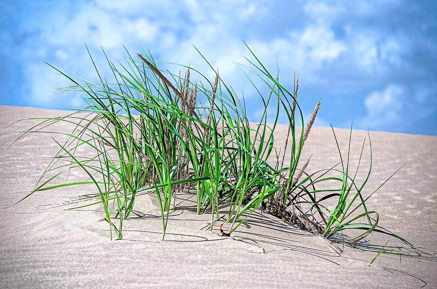 Sands And Grasses Of Jockeys Ridge 2011 Photograph