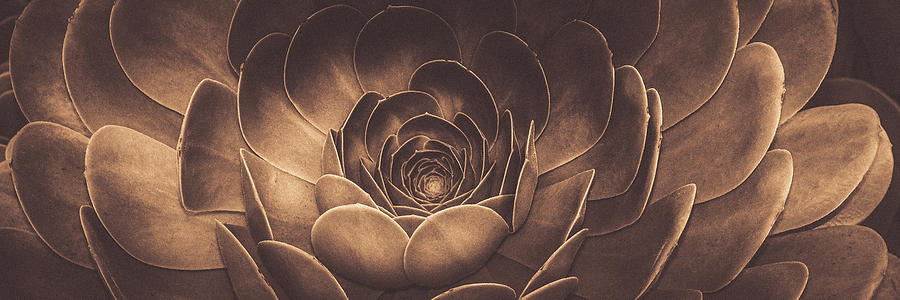Santa Barbara Succulent#11 by Jennifer Wright