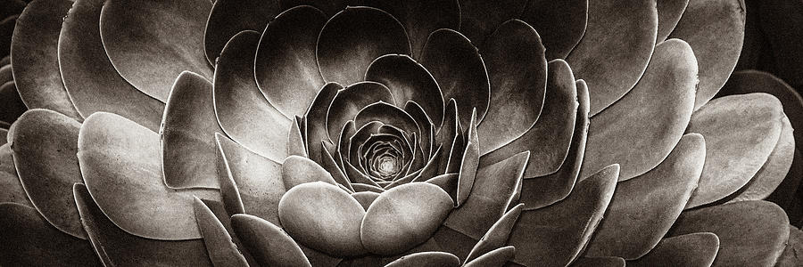 Santa Barbara Succulent#13 by Jennifer Wright