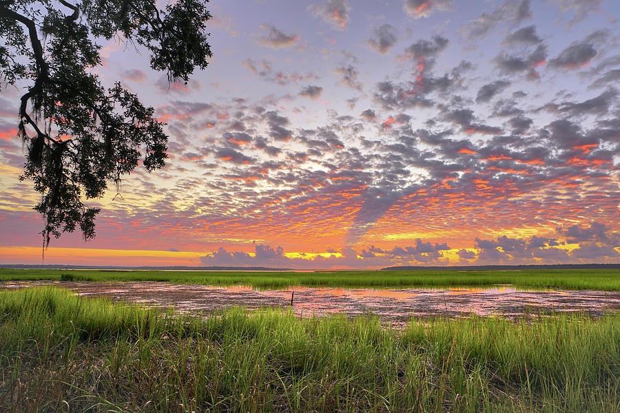 Sapelo Summer by Kenny Nobles