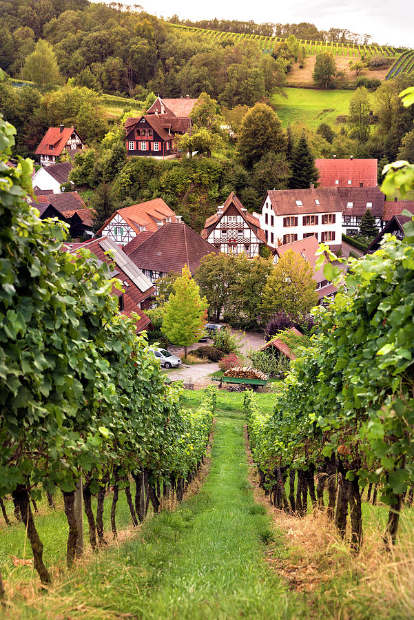 Sasbachwalden vineyards and houses by RicardMN Photography