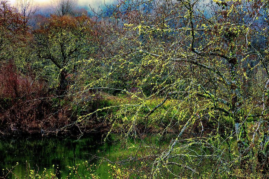 Satsop Morning 06 Photograph