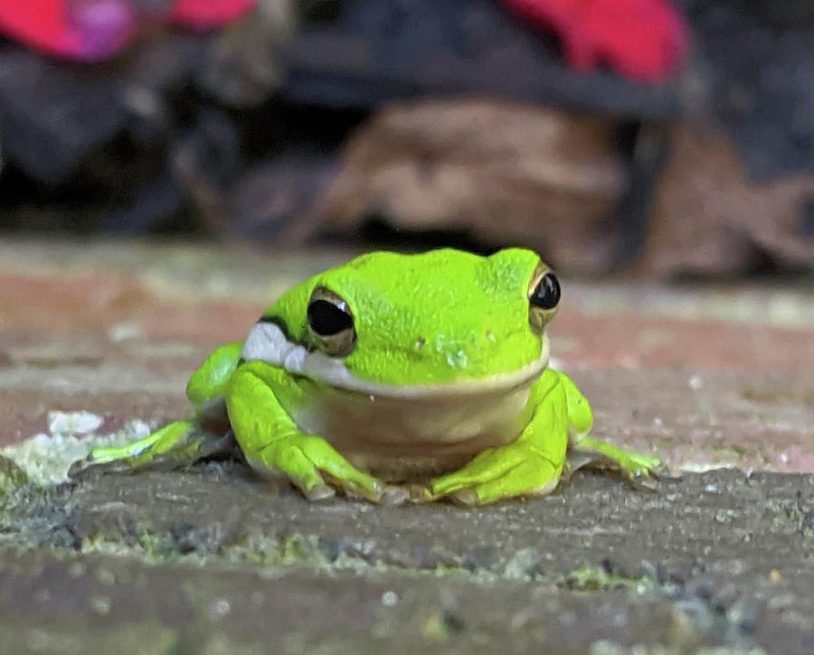 Saturday Frog Photograph