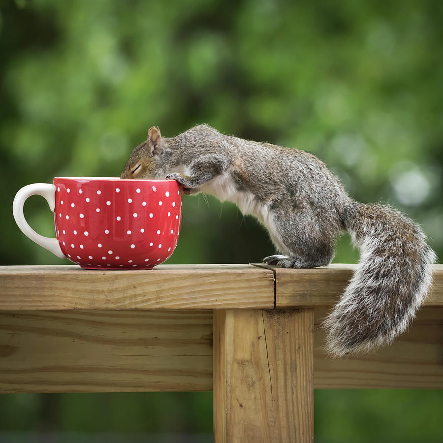 Savor the goodness in life Squirrel Square by Terry DeLuco