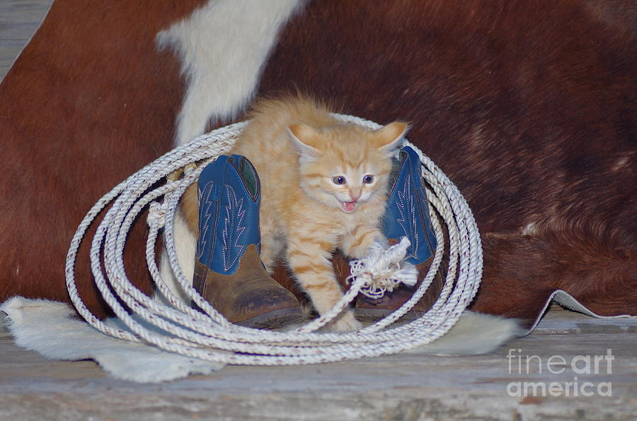 Scaredy Cat Photograph