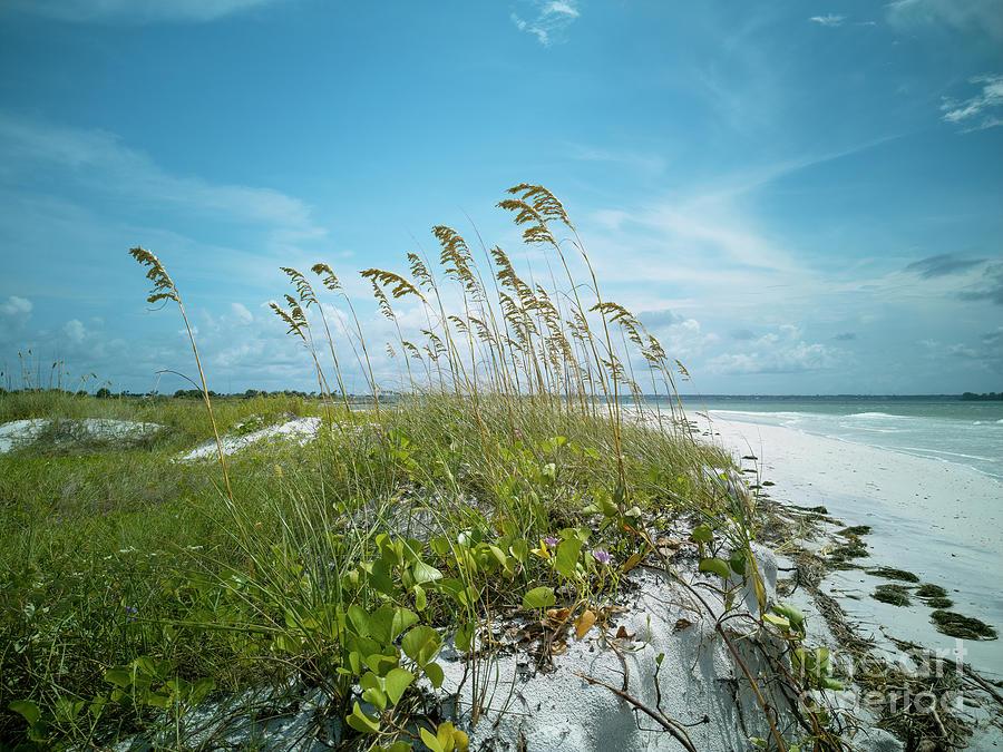Uniola Paniculata Photograph - Scenic Beach And Sea Oats by Felix Lai